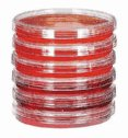 EW-06139-00 Sterile Petri Dishes; 100 mm dia x 15 mm H; 500/box